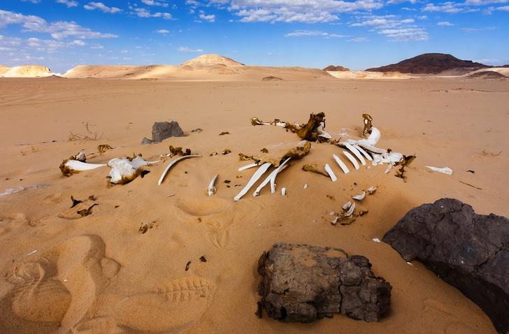 Bleached Desert Bones